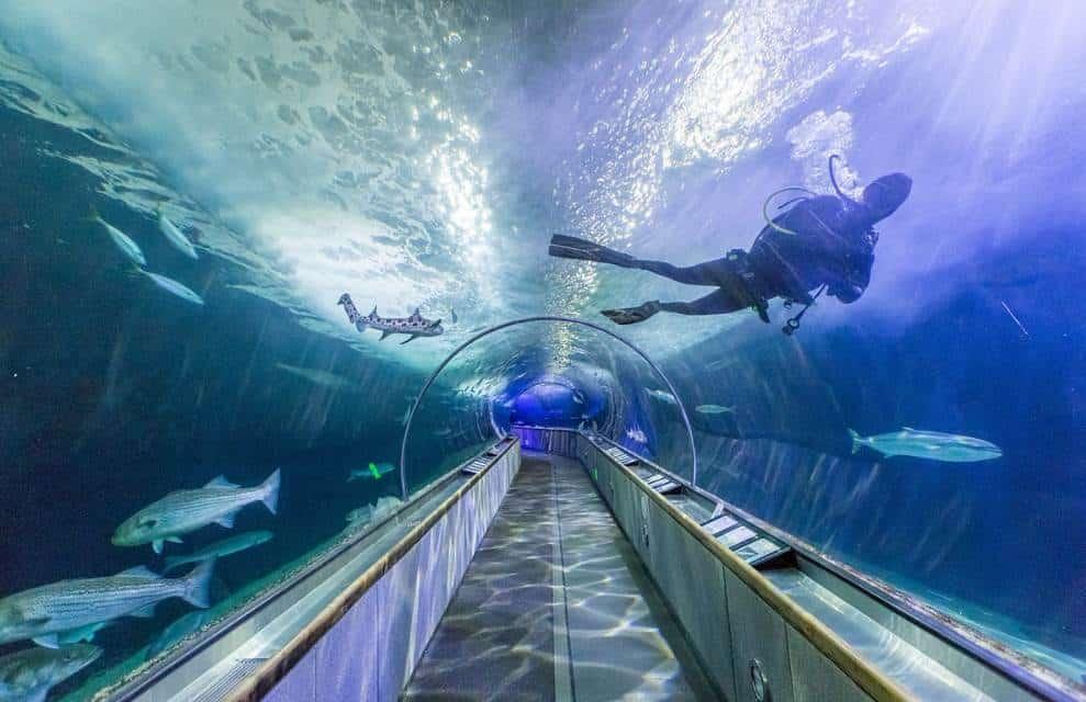Aquarium of the bay tunnel