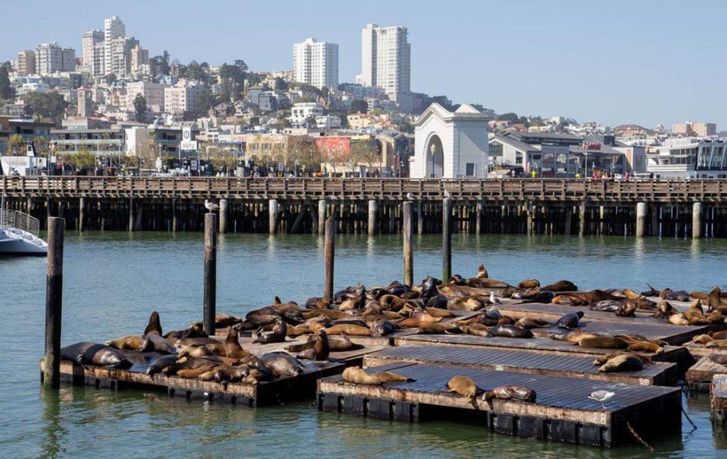 pïer 39 sea lions